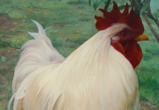 portrait-of-rooster
