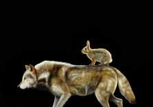 Karen Hollingsworth - Unlikely Companions - 36x36 - oil on canvas