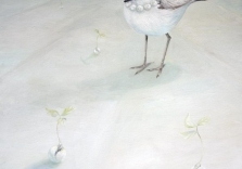 snowy-plover-pearls-of-wisdom