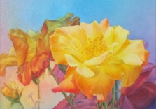 paula-henchell-yellow-rose-12_-x-16-acrylic-and-wc