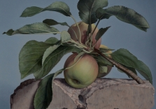 sandra-robinson-apples-on-pink-granite-12-x-12-oil-on-panel