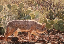 sue-gombus-under-the-desert-sun-20x30-pastel