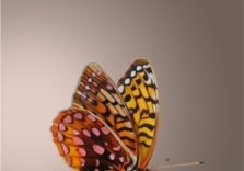 butterflymakeover